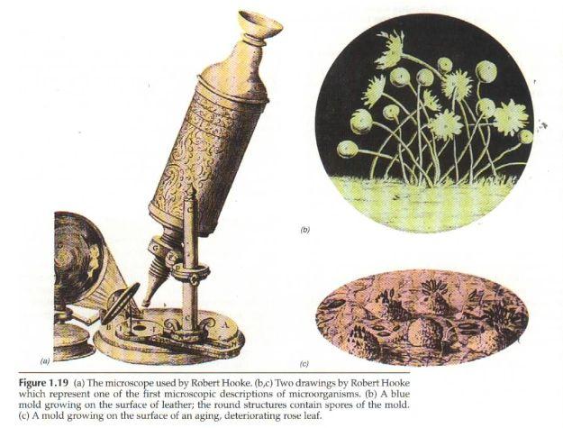 核心提示:列文虎克的显微镜