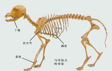 狗符号图骨骼图纸代码电气大全图片