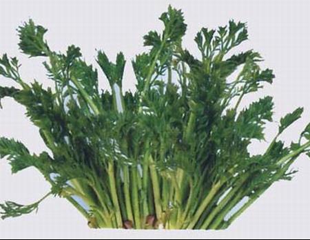 推荐十种营养值很高的野菜_美食图库_食品图库_食品伙伴网 - 开心 - 我的博客