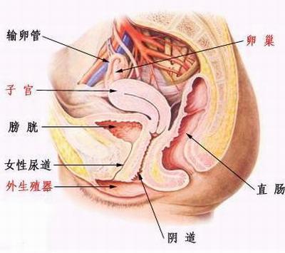 女性尿道口裂开的图片