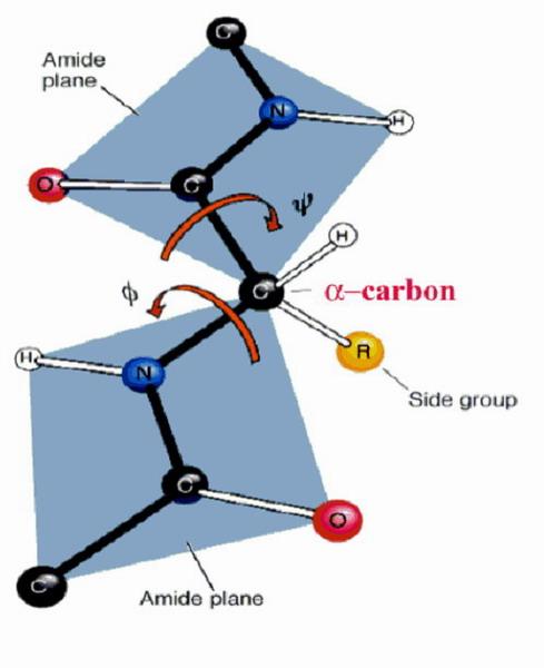 蛋白质立体结构原则2
